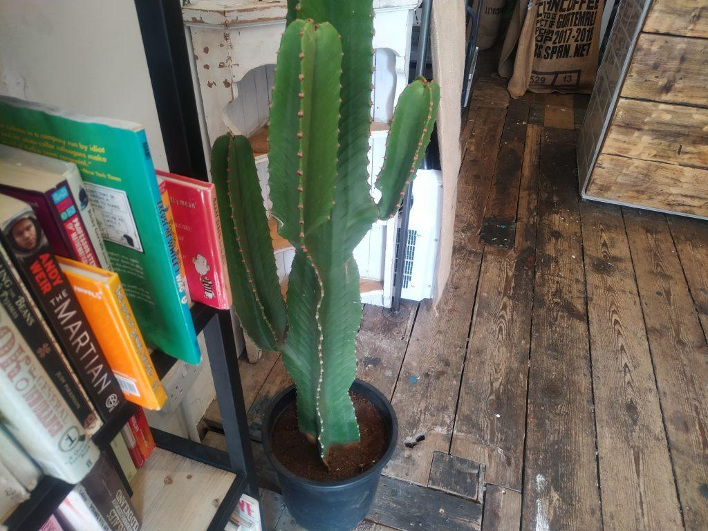 Knihy + kaktus
